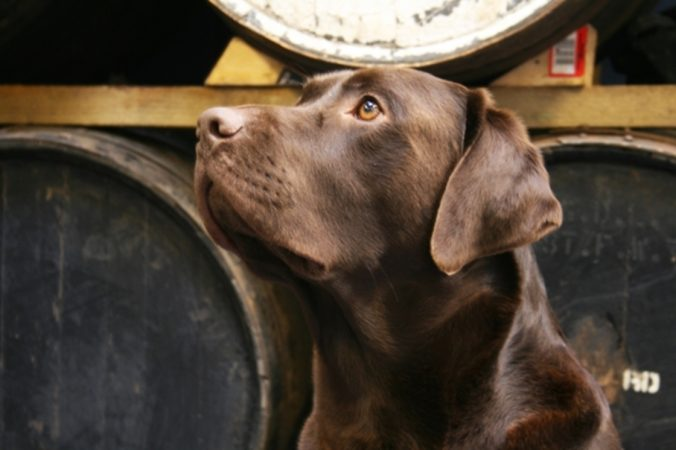 Dogs can earn you 'paw-ternity leave'