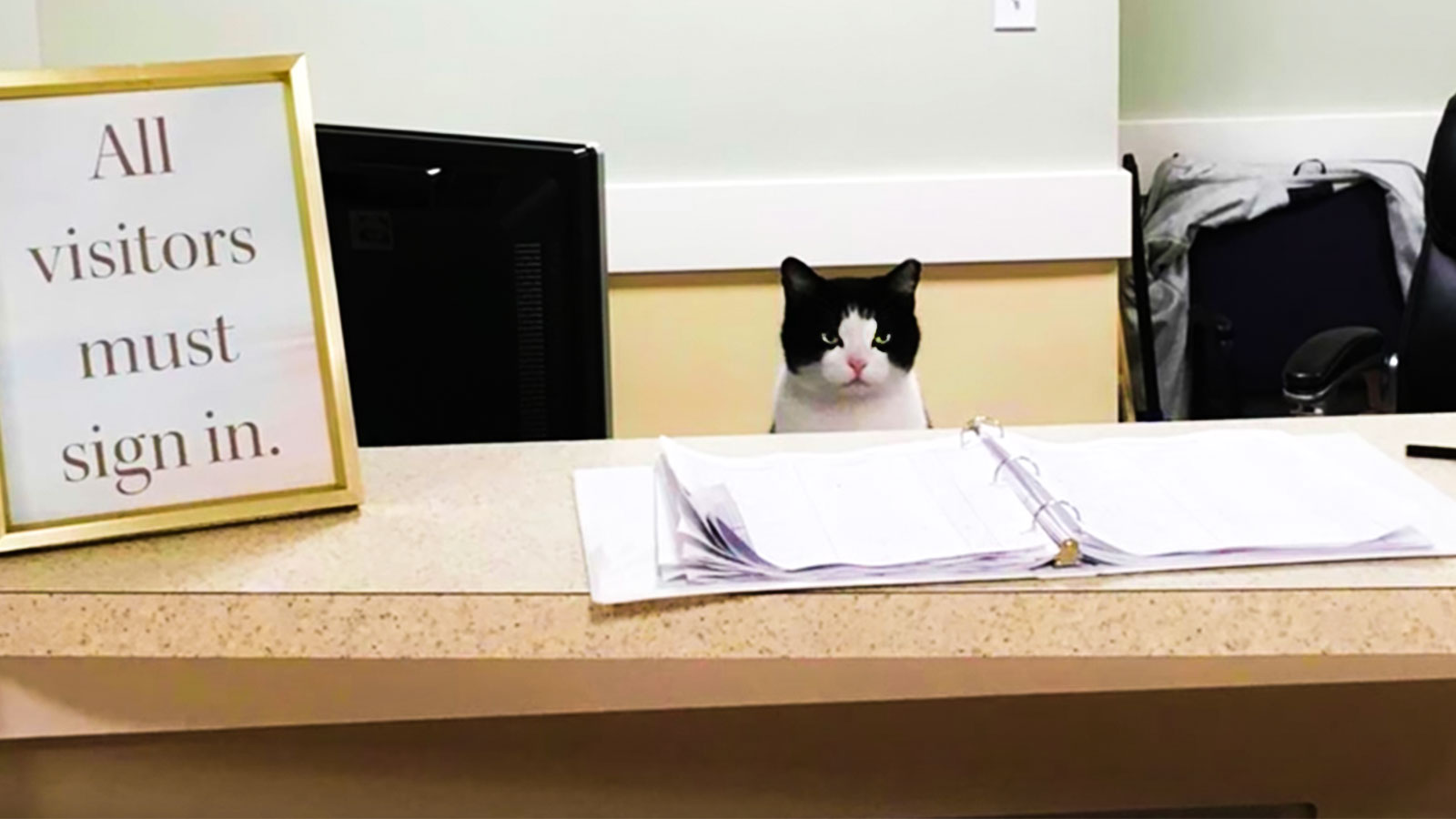 How Oreo The Cat Landed A Great Job And What She Can