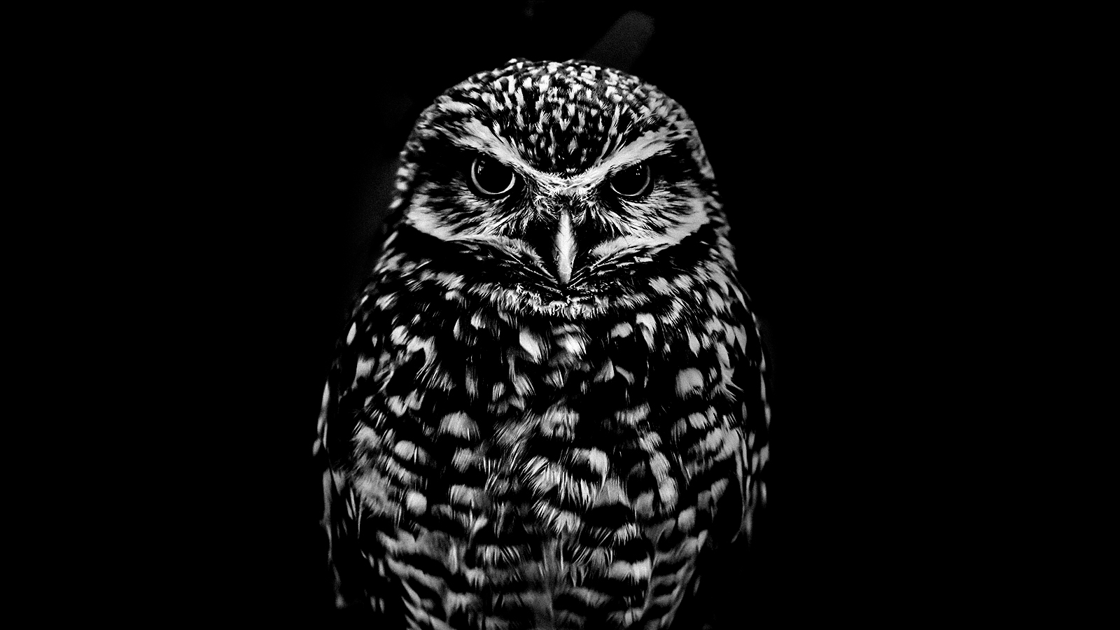 It turns out being a night owl doesn't affect productivity