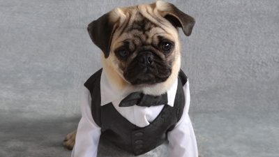 A woman allegedly used company money to buy her pug a tuxedo. She got fired