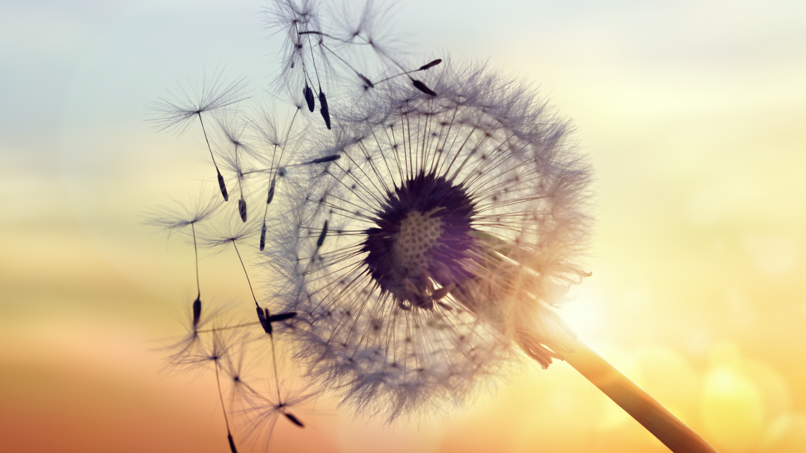 Lowering your levels of this may actually help your allergies