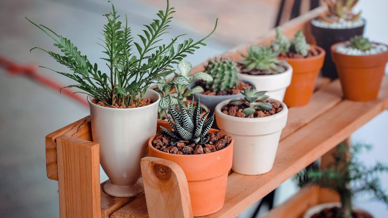 This is why Millennials are obsessed with houseplants