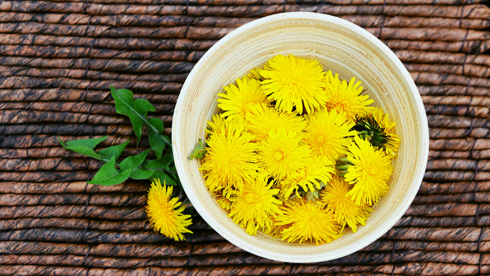 Why you should be eating dandelions, according to a medical advisor