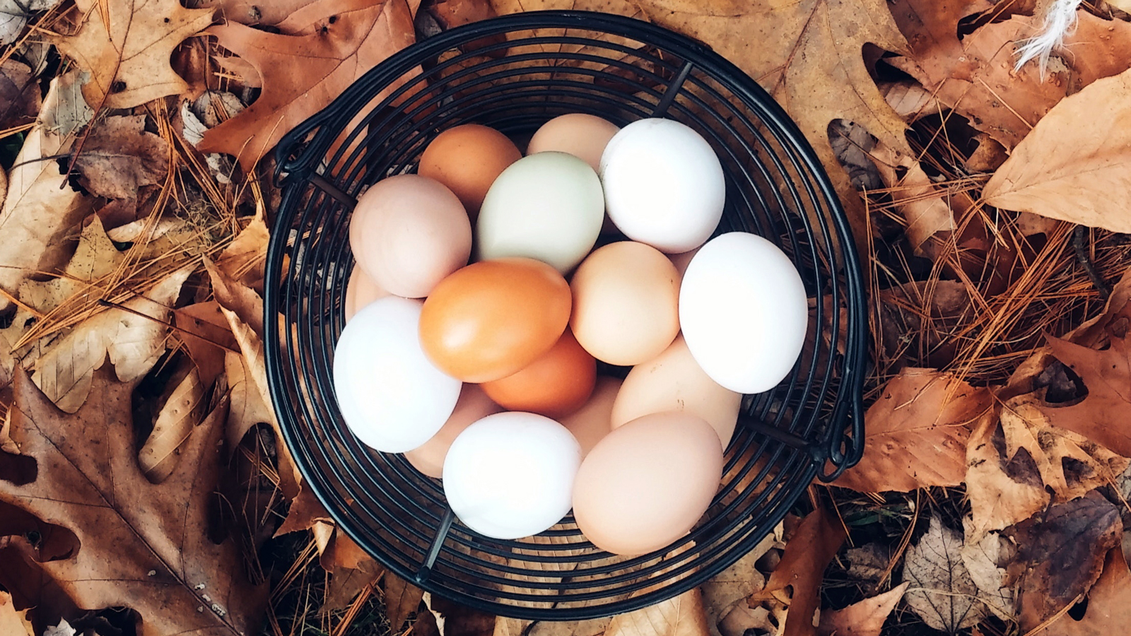 Eating just 3-4 eggs per week increases your risk of heart disease, death