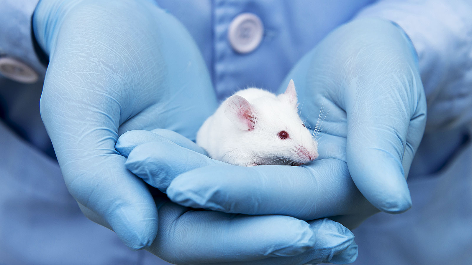 New study on mice uncovers surprising aspect of the aging process