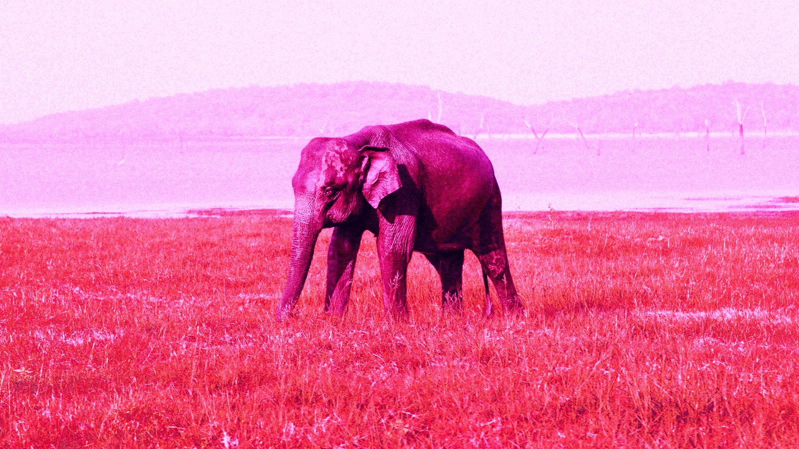Hope you're hungry – it's time to be smart at eating pink elephants