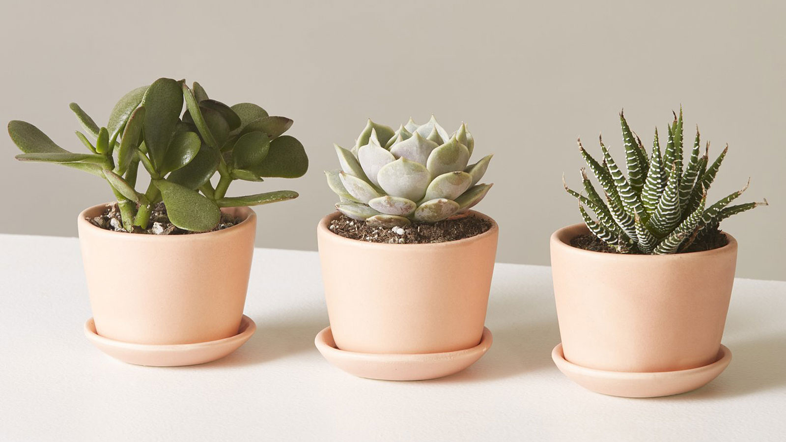 9 Mini Succulents From Your Desk That Will Survive Your Dimly Lit